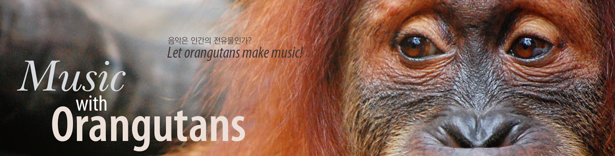 Music with Orangutans - 음악은 인간의 전유물인가? Let orangutans make music!